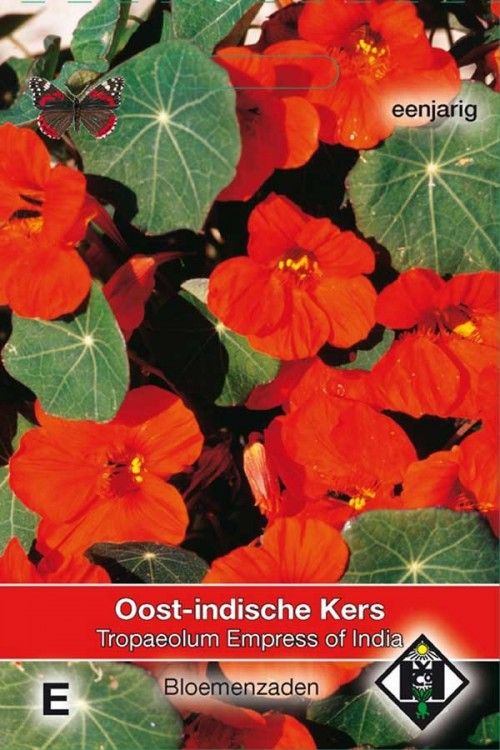 Nasturtium (Tropaeolum) Empress of India