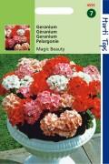 Magic Beauty F1 Geranium Pelargonium zaden