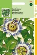 Passion Flower (Passiflora) Passion Flower