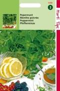 Mentha  Peppermint seeds