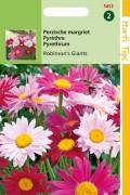 Robinsons Giants Pyrethrum Tanacetum seeds