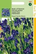 Royal Family blue siererwt Lathyrus zaden