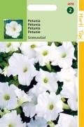 Snowball Petunia
