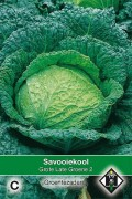 Savoy Cabbage Grote Late Groene 2