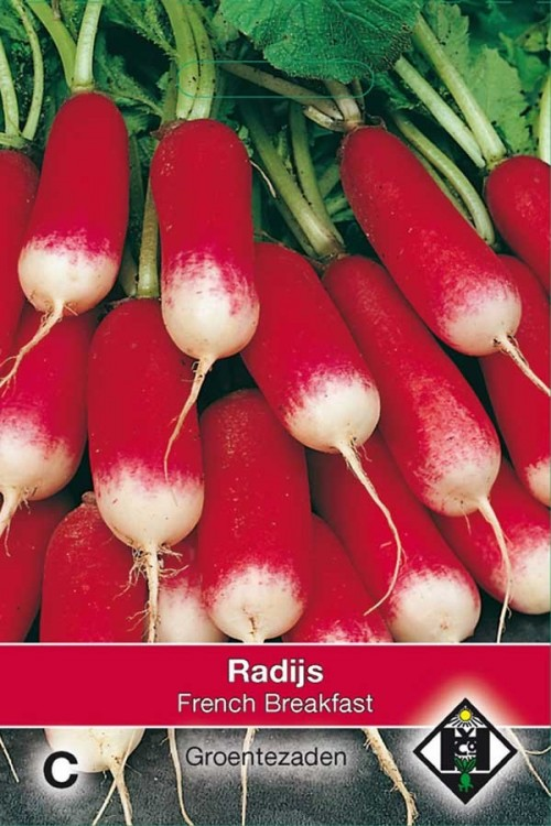French Breakfast - Radish
