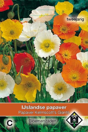 Poppy (Papaver) Kelmscotts Giants - Iceland Poppy
