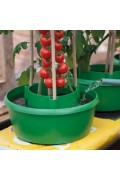 Plant Halo bewatering bescherming