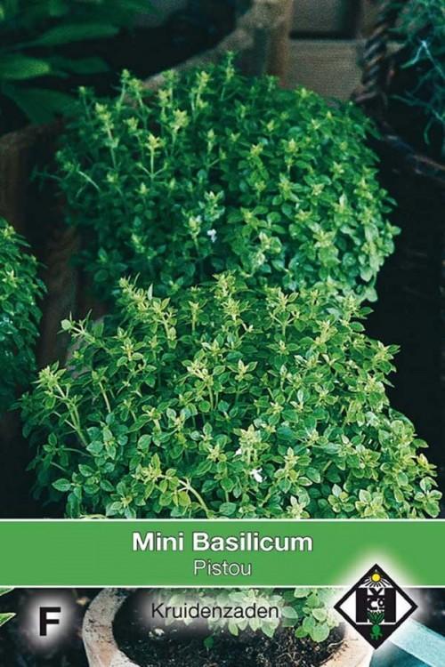 Pistou - Mini Basilicum zaden