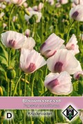 Poppy (Papaver) Breadseed