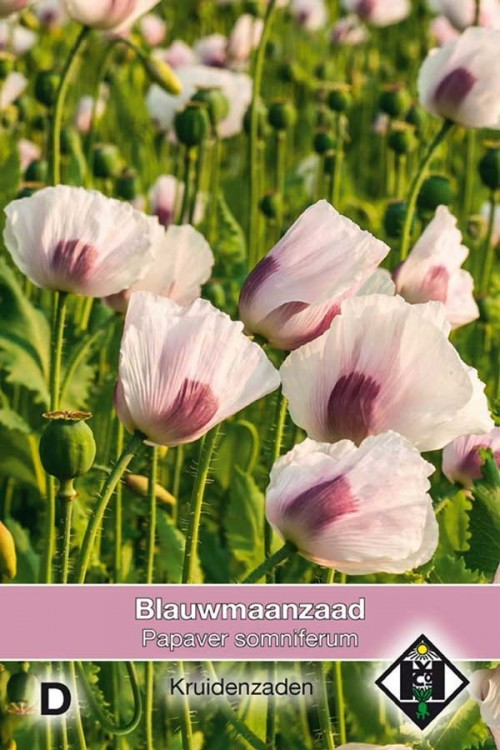 Breadseed - Papaver