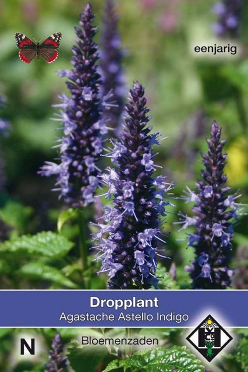 Astello Indigo Dropplant zaden