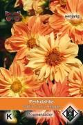 Sunny Reggae - Dahlia seeds