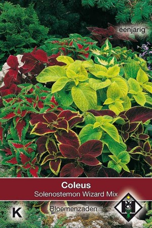 Coleus Wizard Mix Solenostemon