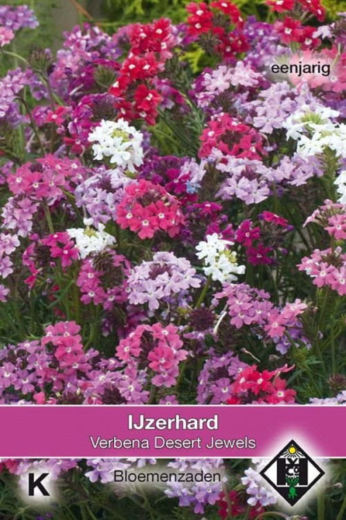 Desert Jewels - Verbena seeds
