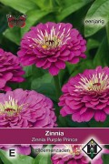 Purple Prince Zinnia seeds
