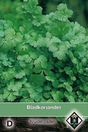 Koriander - Coriander Bladkoriander