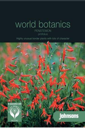 Pinifolius - Penstemon seeds
