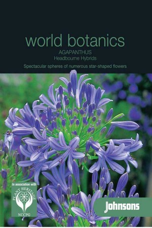 African Lily (Agapanthus) Headbourne Hybrids