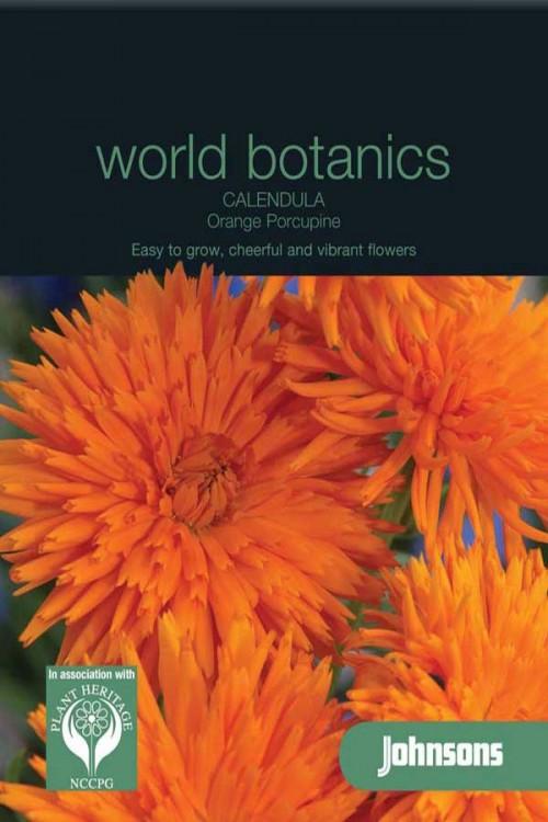 Orange Porcupine - Calendula