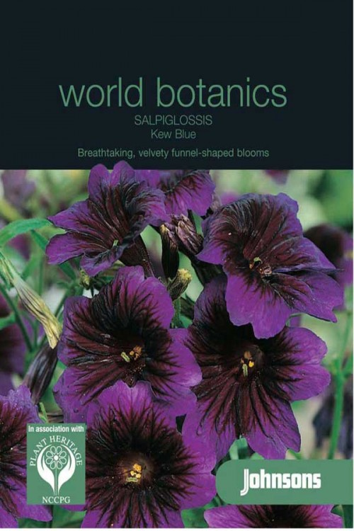 Kew Blue Brokaatbloem - Salpiglossis zaden