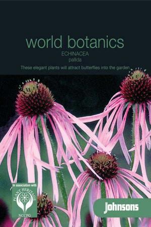 Zonnehoed (Echinacea Rudbeckia) Pallida