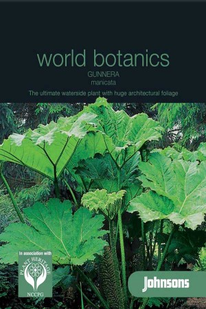 Giant rhubarbs (Gunnera) Gunnera manicata