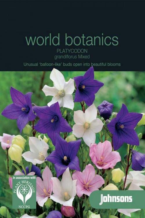 Platycodon Grandiflora - Ballonplant zaden