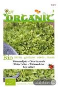 Organic Endive - Blonde A Coeur Plein Endive seeds