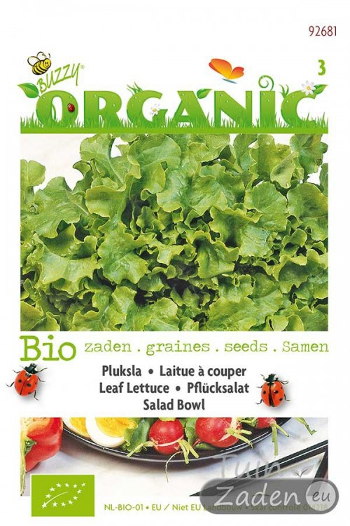 Salad Bowl Pluksla - Organic