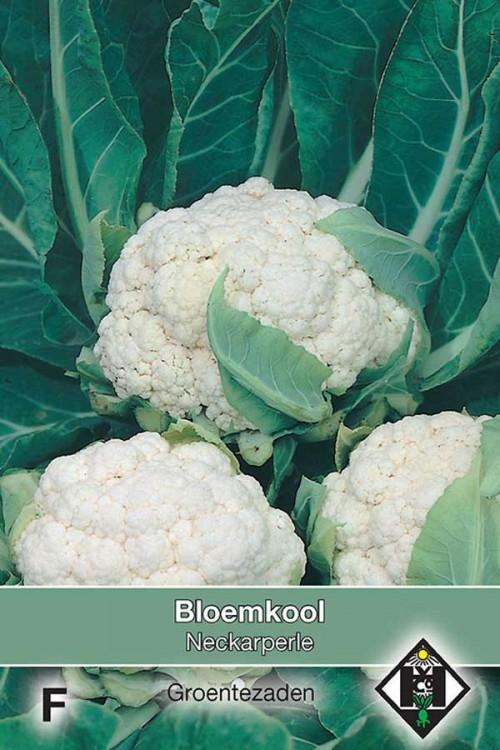 Neckarperle - Cauliflower