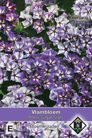 Vlambloem (Phlox) Sugar Stars
