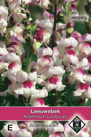 Snapdragon (Antirrhinum) Lucky Lips