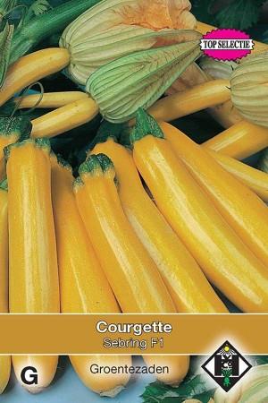Courgette - Zucchini Sebring F1 hybride