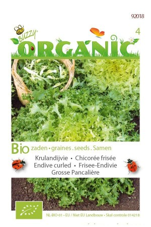Organic seeds Endive Grosse Pancaliere