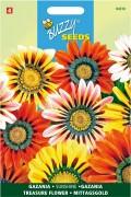 Sunshine Gazania seeds