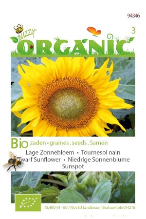 Organic seeds Sunspot Dwarf Sunflower