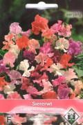 Fragrantissima - Lathyrus