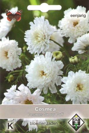 Cosmos (Cosmea) Snow Puff