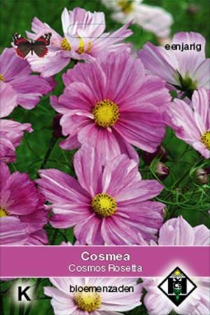 Cosmos (Cosmea) Rosetta