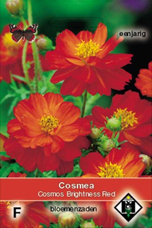 Cosmos (Cosmea) Brightness Red