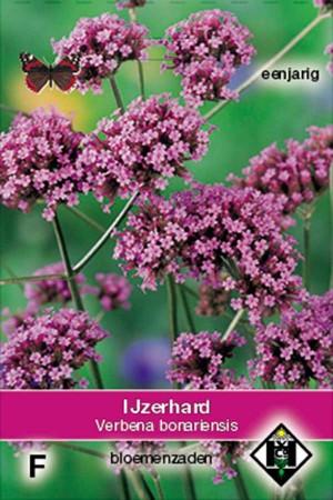 IJzerhard (Verbena) Bonariensis ijzerhard