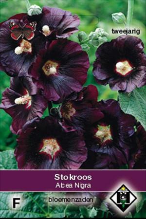 Stokroos (Alcea Rosea) Zwarte Nigra Stokroos