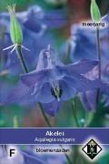 Columbine (Aquilegia) Blue Aquilegia