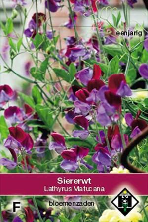 Reuk- of siererwt (Lathyrus) Matucana
