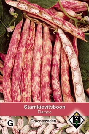 Stamslabonen Flambo Stamkievitsboon