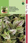 Spices & herb seeds Sorrel Red Veined