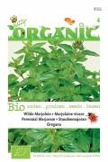 Perennial Marjoram - Oregano