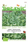Organic Endive - Avant Garde Endive seeds