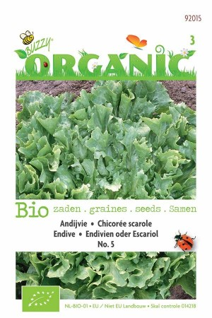 Biologische zaden Andijvie No.5