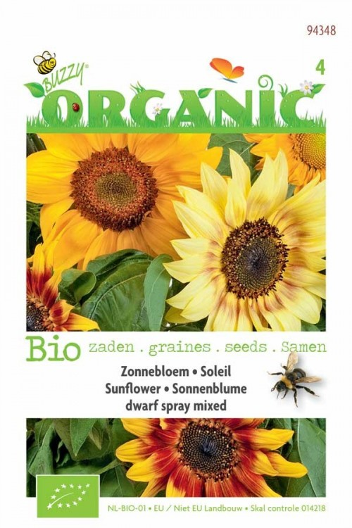 Dwarf Spray Sunflower - Organic